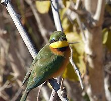 Bee-eater by Tessa Manning
