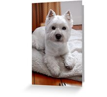 Maevey the Westie Greeting Card