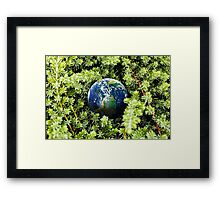 Nature Of Earth Framed Print