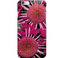 Like Suns, Like Stars or Just Exotic Mums iPhone Case/Skin