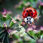 close up of a ladybird by Sara Sadler