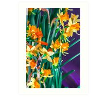 ABSTRACT DAFFODILS IN ORANGE Art Print