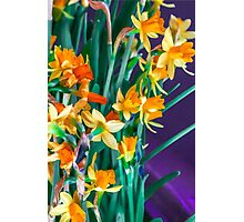 ABSTRACT DAFFODILS IN ORANGE Photographic Print