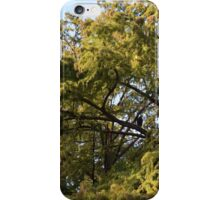 Within the Trees iPhone Case/Skin
