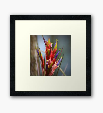 Brilliant Air Plant Framed Print