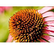 Floral Texture Photographic Print