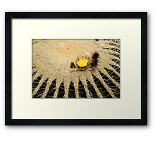 Fascinating Cactus Bloom - Soft and Fragile Among the Thorns Framed Print