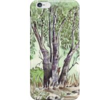 Blue gum trees across the road from my studio iPhone Case/Skin