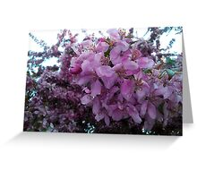 Blossoms.  Greeting Card