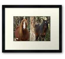 Two Brumby Stallions Framed Print