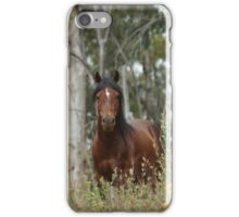 Bay Brumby Stallion iPhone Case/Skin