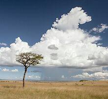 Mara Plains by GinnyScholes