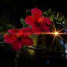 Night Hibiscus by Al Bourassa