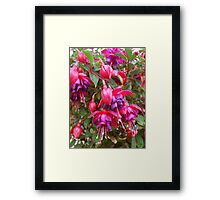 NATURE 14 Framed Print