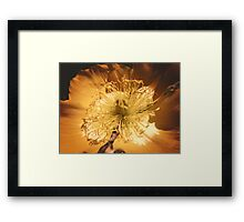 Yellow Flower Sunny Daze Framed Print