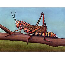 Cricket Photographic Print