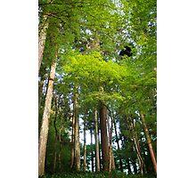 Trees in Korankei valley Photographic Print