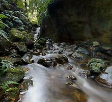 The Stream by Rob Lavoie