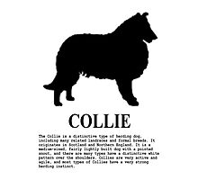 Collie Photographic Print