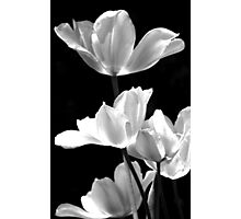 Spring In Black And White Photographic Print
