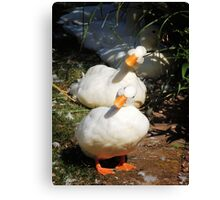 Can't distinguish us, can you? Canvas Print