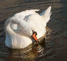 Swan Art by Marilyn Cornwell
