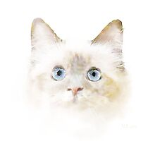 Blue Eyed kitten by Bamalam Art and Photography