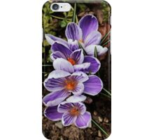 crocuses lined up  iPhone Case/Skin