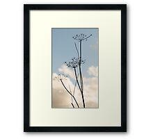 Seedpod silhouette Framed Print