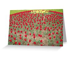 Lots of Red Tulips 4 Greeting Card