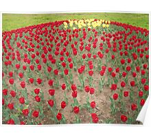 Lots of Red Tulips 4 Poster