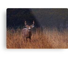 In Autumns Fields - White-tailed deer Metal Print