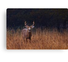 In Autumns Fields - White-tailed deer Canvas Print