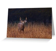 In Autumns Fields - White-tailed deer Greeting Card