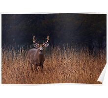 In Autumns Fields - White-tailed deer Poster
