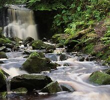 Tigers Clough Falls. by Dave Staton
