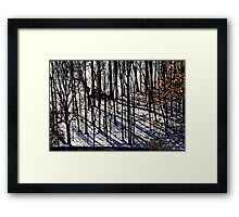The woods in Winter Framed Print