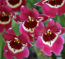 Red Orchids by Kathleen Brant