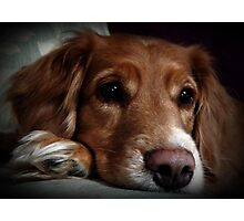 It's A Dogs Life Photographic Print