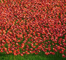 Ceramic poppies by Braedene