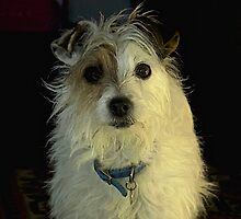 Portrait Of A Terrier by Kevin Wortley