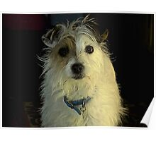 Portrait Of A Terrier Poster