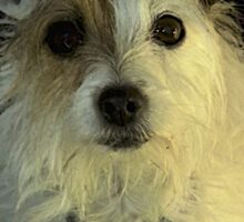 Portrait Of A Terrier Sticker