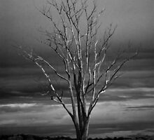 Dead tree  by franceslewis