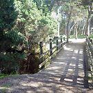 Bridge of Shadows by Judi Rustage
