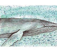 Whale vector Photographic Print
