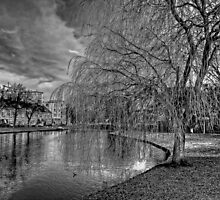Winter Willow B&W by Tom Gomez
