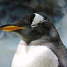 Sleepy Snowy Penguin by CreativeEm