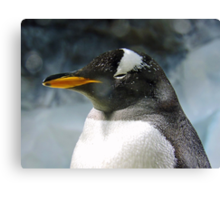 Sleepy Snowy Penguin Canvas Print