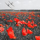 The Few - Includes a donation to the Poppy Appeal by SwampDogPhoto
